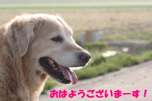bu-50170001.jpg
