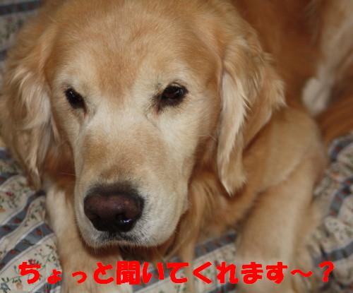 bu-50260001.jpg
