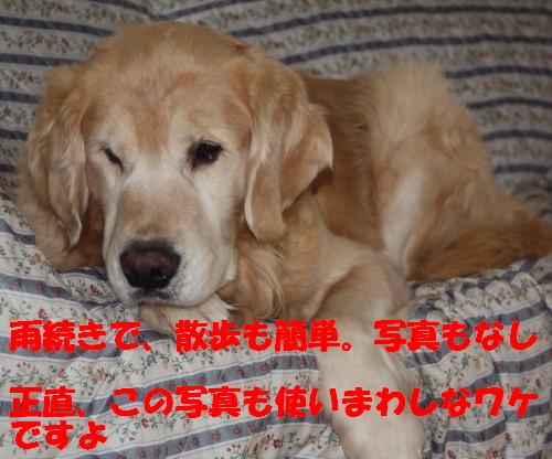 bu-50280001.jpg