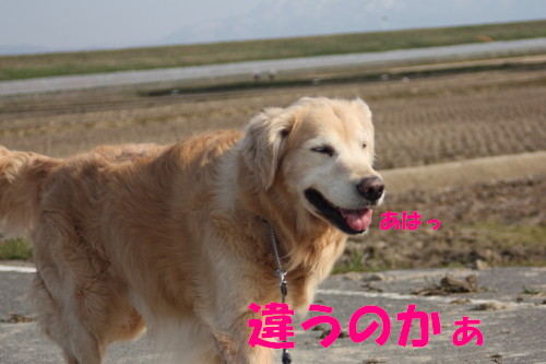 bu-71170001.jpg