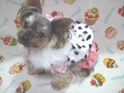 buro33_20110927204255.jpg