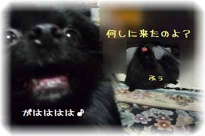 姫ちゃんを襲撃1