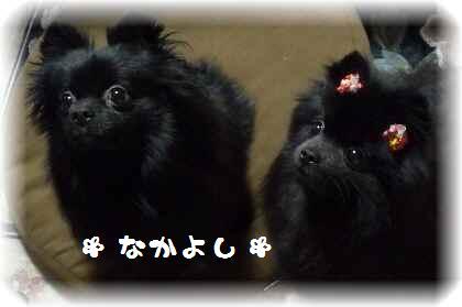 姫ちゃんを襲撃4