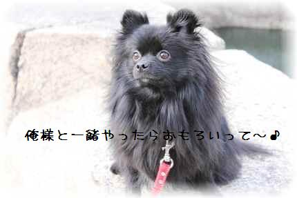 大阪城満喫11