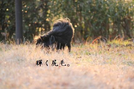 みーちゃん撮影6