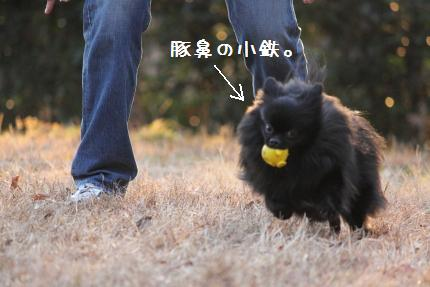 みーちゃん撮影7