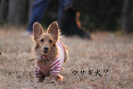 みーちゃん撮影14