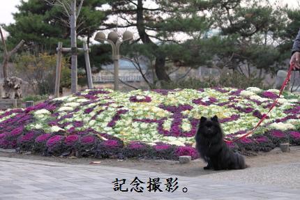 みーちゃん撮影16
