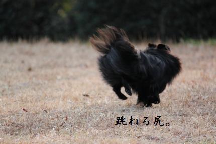 みーちゃん撮影15