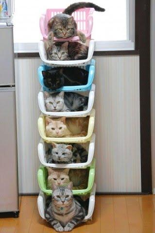 たくさんいるネコを一カ所にまとめて集めて整理するとこんなことになるという写真いろいろ