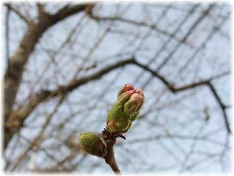 春を探しに10(1)