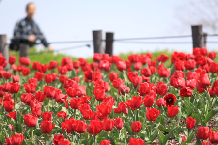 鶴見緑地でお花見2