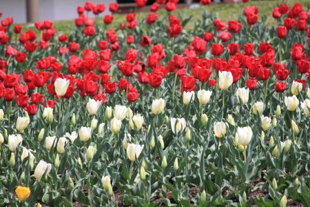 鶴見緑地でお花見6