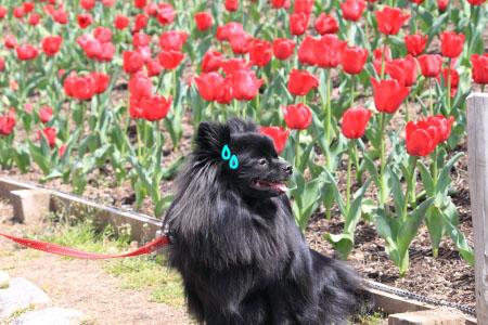 鶴見緑地でお花見10のコピー