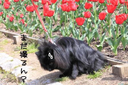 鶴見緑地でお花見7のコピー