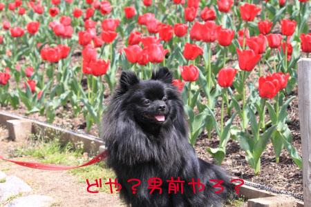 鶴見緑地でお花見9のコピー