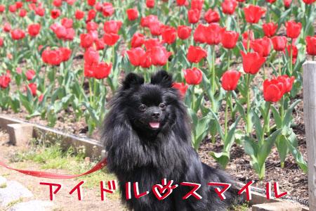 鶴見緑地でお花見8のコピー