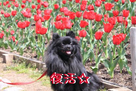 鶴見緑地でお花見11のコピー