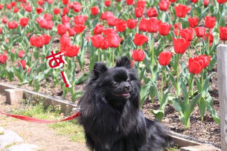 鶴見緑地でお花見13のコピー