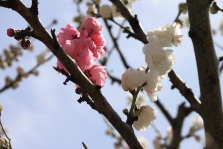 鶴見緑地でお花見18