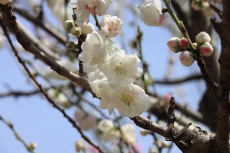 鶴見緑地でお花見17