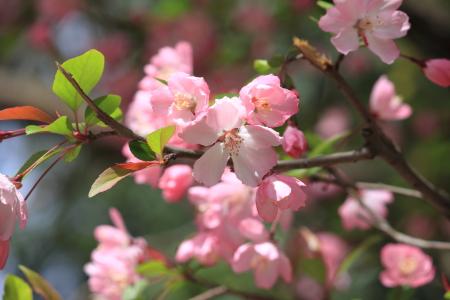 鶴見緑地でお花見20