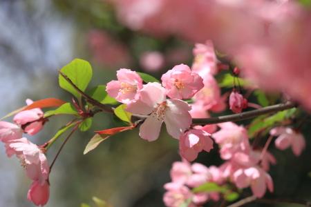鶴見緑地でお花見19