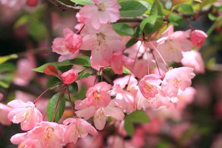 鶴見緑地でお花見21