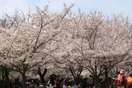 鶴見緑地でお花見22