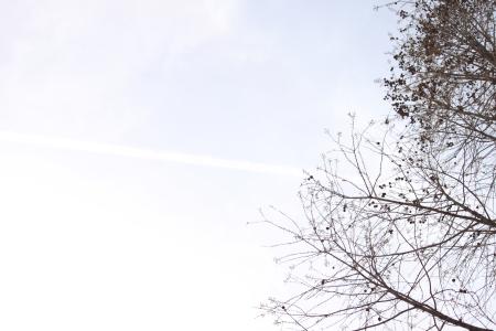 鶴見緑地でお花見25