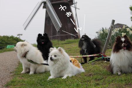風車11のコピー