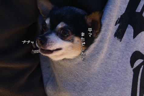 DSC013780107.jpg