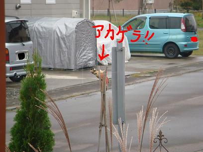 DSC03097.jpg