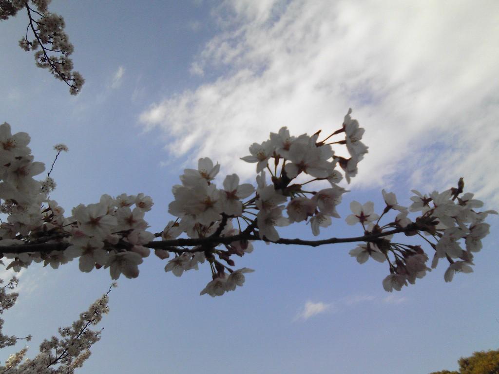 小石川植物園2012