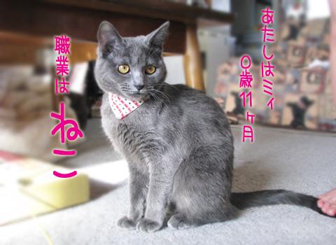 003_Rのコピー