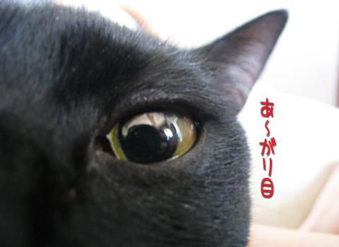 026_Rのコピー