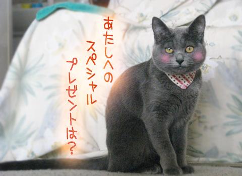 066_Rのコピー