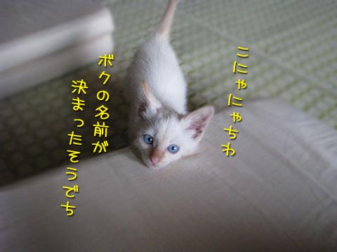 011_Rのコピー