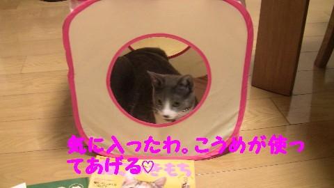猫の気持3