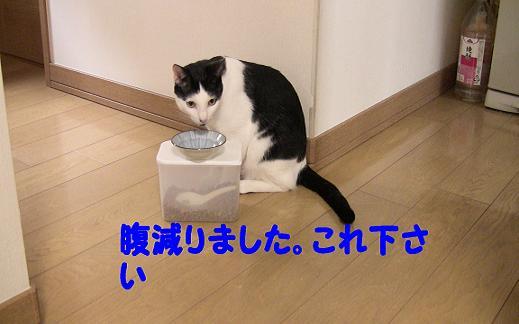 ブログ用8