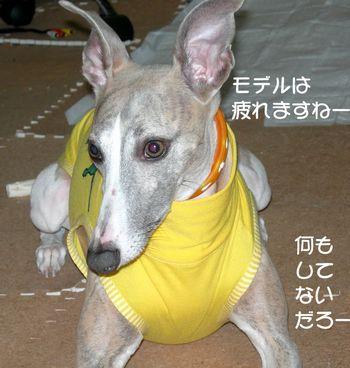 puma黄3