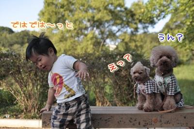 3_20131112224945ec0.jpg