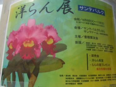 2010_0407春の洋ラン展0110