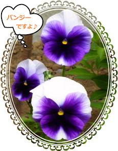 花ブ520-5