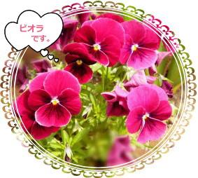 花ブ524-6