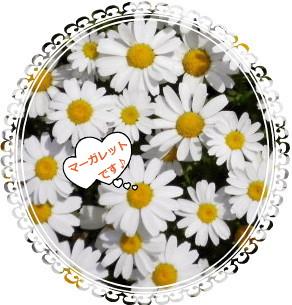 花ブ527-6
