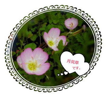 花ブ67-6