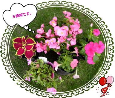花ブ614-3