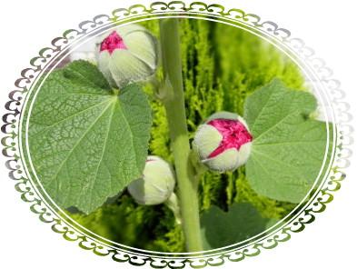 花ブ617-4