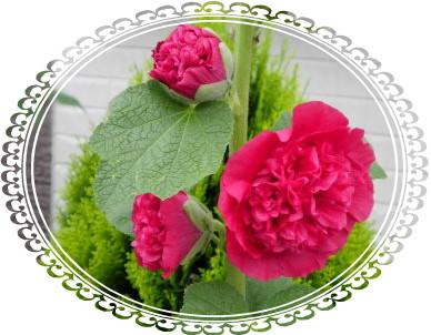 花ブ617-6